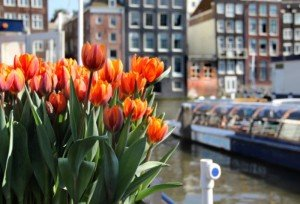 What revenue does cultural tourism generate for Amsterdam?