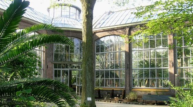 Hortus Botanicus – Amsterdam's answer to botanical bliss